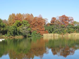 Ukima-park-01_20201207124301